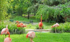 paris-jardin-des-plantes-flamingos The most beautiful gardens in Paris The most beautiful gardens in Paris paris jardin des plantes flamingos 238x143