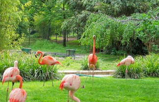 paris-jardin-des-plantes-flamingos The most beautiful gardens in Paris The most beautiful gardens in Paris paris jardin des plantes flamingos 324x208